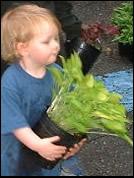 move-plants
