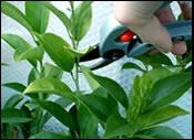 houseplants_houseplantsguru_com