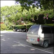 BPF_Spring-House_interior_houseplants_Bromeliad_h.jpg.rend.hgtvcom.616.462